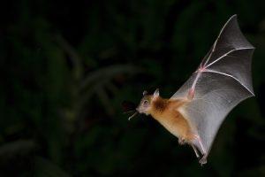 暗闇の中飛ぶコウモリ