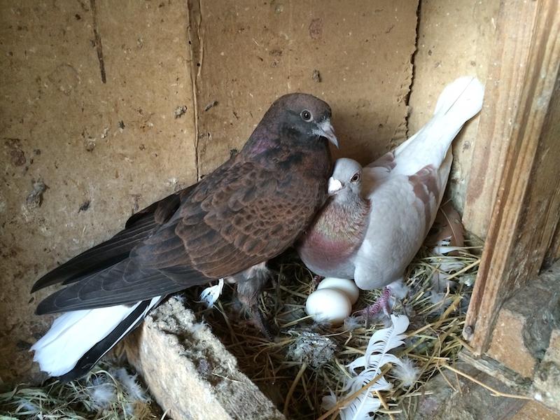 カビキラー 鳩 対策 カビ対策専門会社が教えるカビキラーが効果的な理由