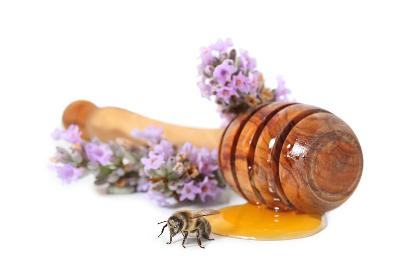 はちみつとミツバチ