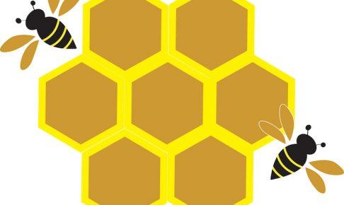 ハチとハチの巣