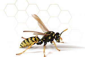アシナガバチのイラスト