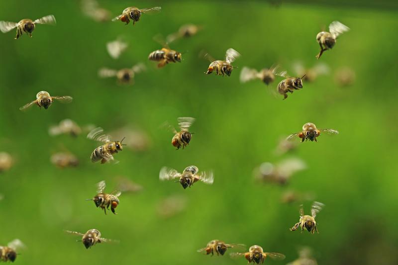 飛んでいる蜂の大群