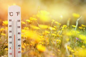 温度計とタンポポの花