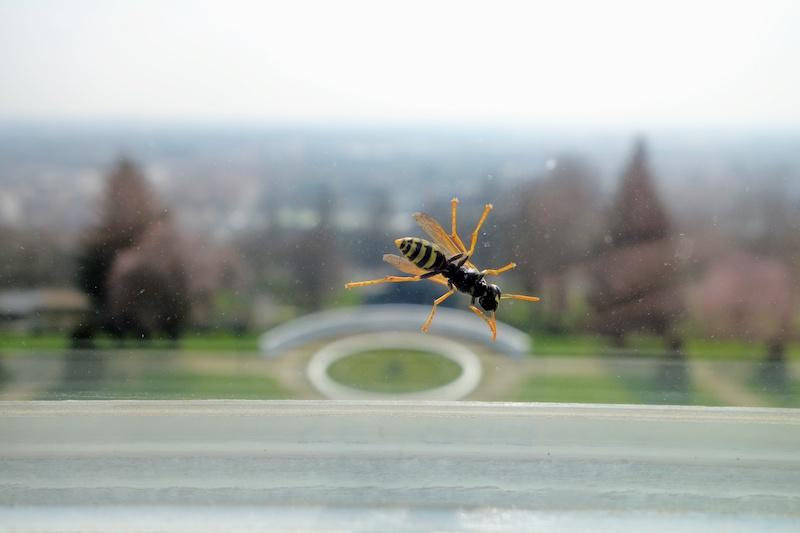 窓に止まる蜂