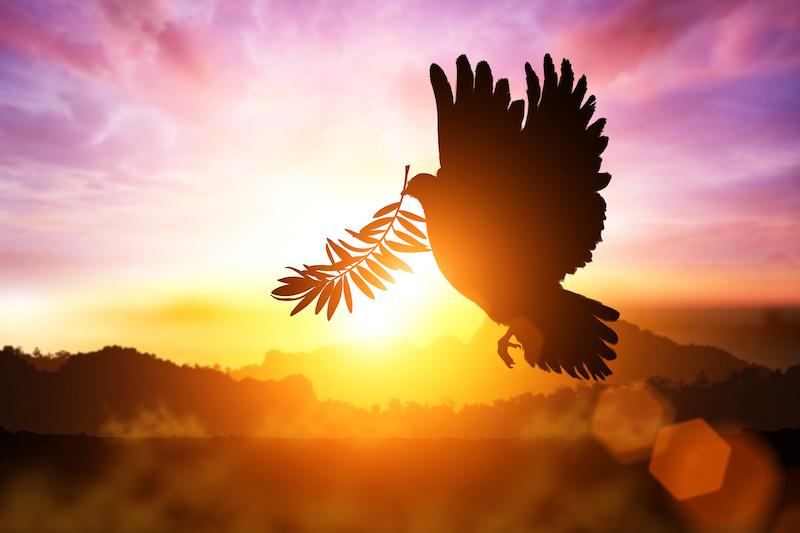 オリーブの葉をくわえて飛ぶ鳩