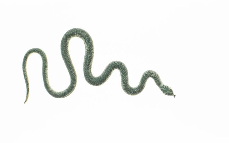 リアルな蛇のおもちゃ