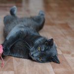 ネズミの玩具で遊ぶ猫