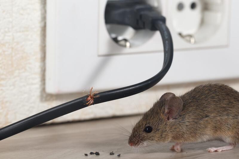 ネズミとかじられたコード