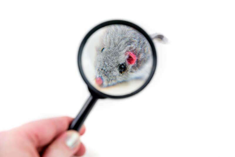 虫眼鏡越しに見るネズミ