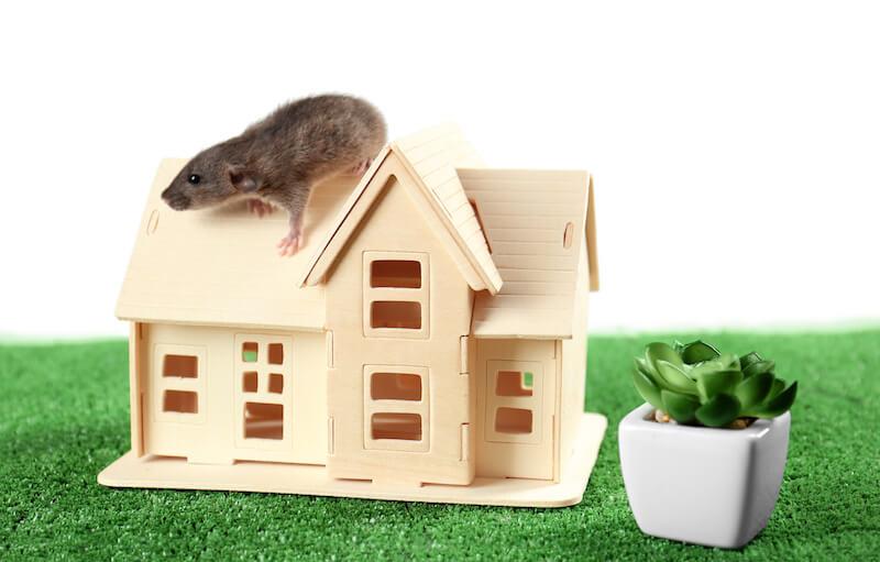 玩具の家の屋根に乗るネズミ