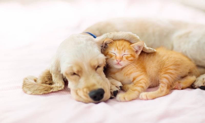 ペットやお子さんの安全を守るために