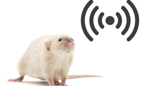 超音波でネズミ駆除ってできるの?