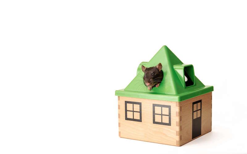 家の中に現れたネズミ